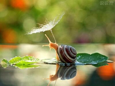 正能量的说说带图片:即使走得再艰难,蜗牛也没有放下沉重的壳