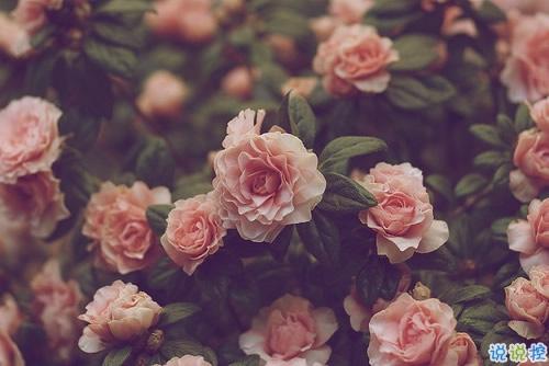 爱错了人换来一身伤痕的说说大全 亲身经历爱情得到的经典伤感说说7