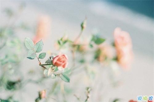 真心爱一个人的说说带图片 自从遇见你人生苦短甜长2