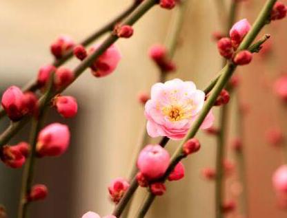 立春节气句子 立春说说心情短语