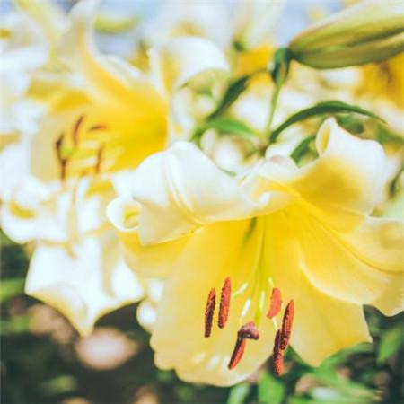 2020二十四节气立春图片大全 唯美高清立春花朵图片