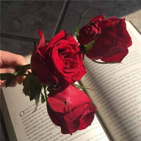2020年情人节红色玫瑰花图片大全 唯美浪漫情人节图片