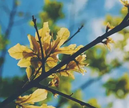 秋季治愈人心的唯美文案 描写秋日美景的说说