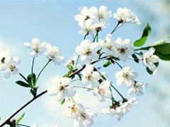 qq说说春天唯美小清新 春天的唯美短句子说说